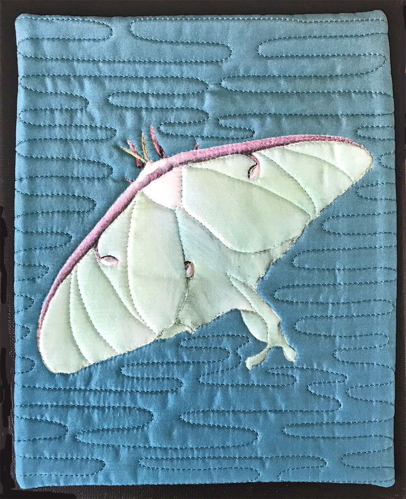 The Luna Moth Quilts